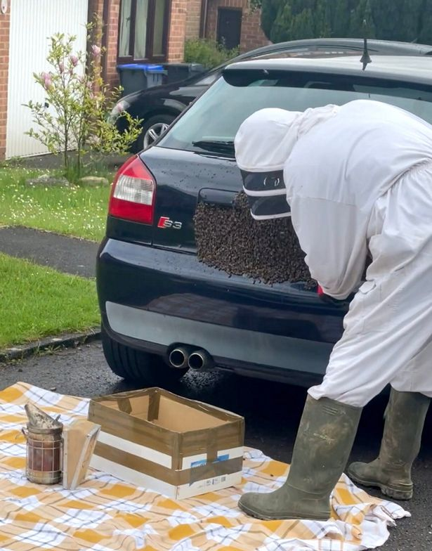 Dad finds 20,000 bees covering his car's number plate like a 'horror movie'